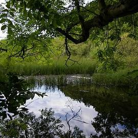 The Environment of Bo'ness. Landscape, Flora and Fauna. Woodlands, Walks and Greenspaces